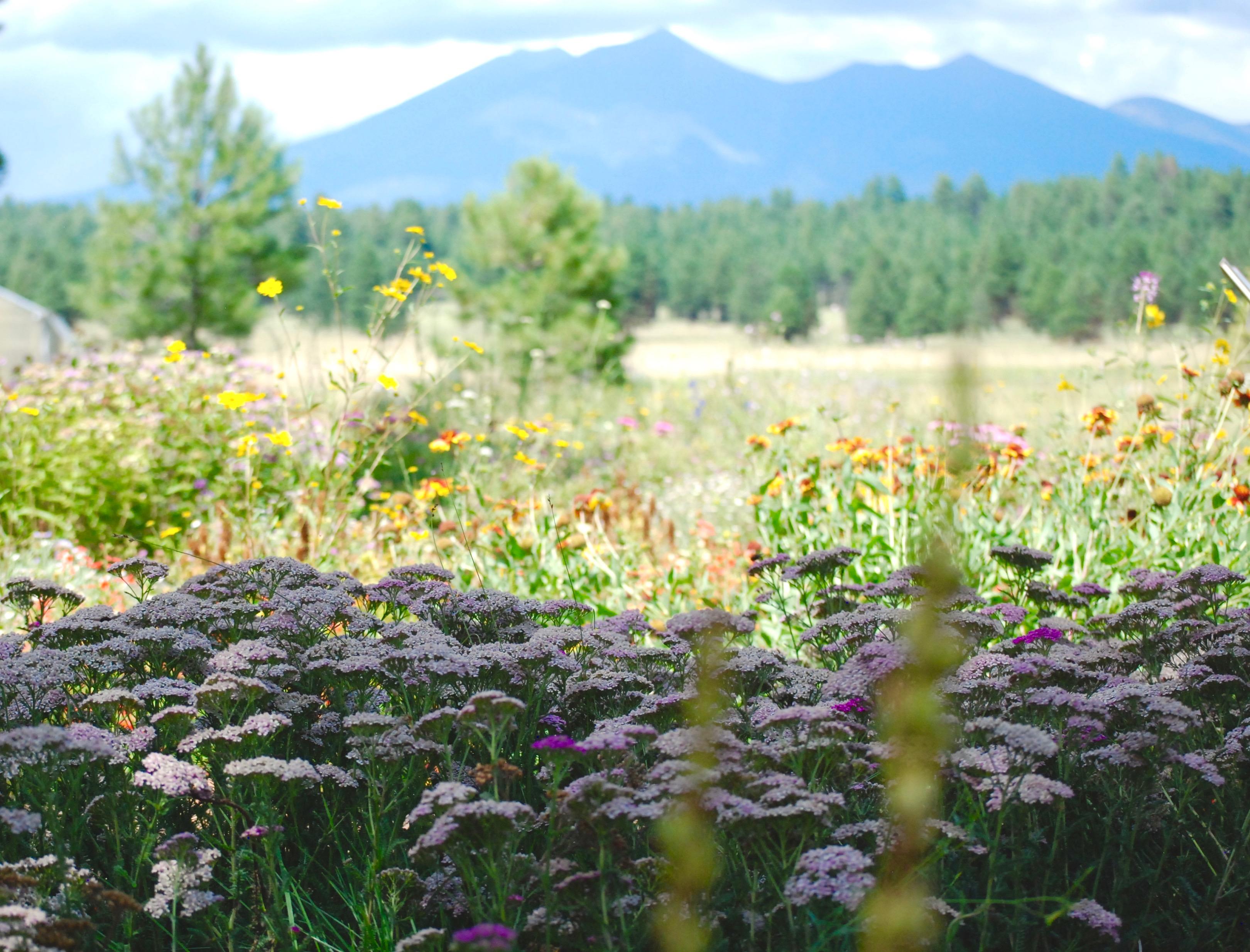 Arboretum Day Trip