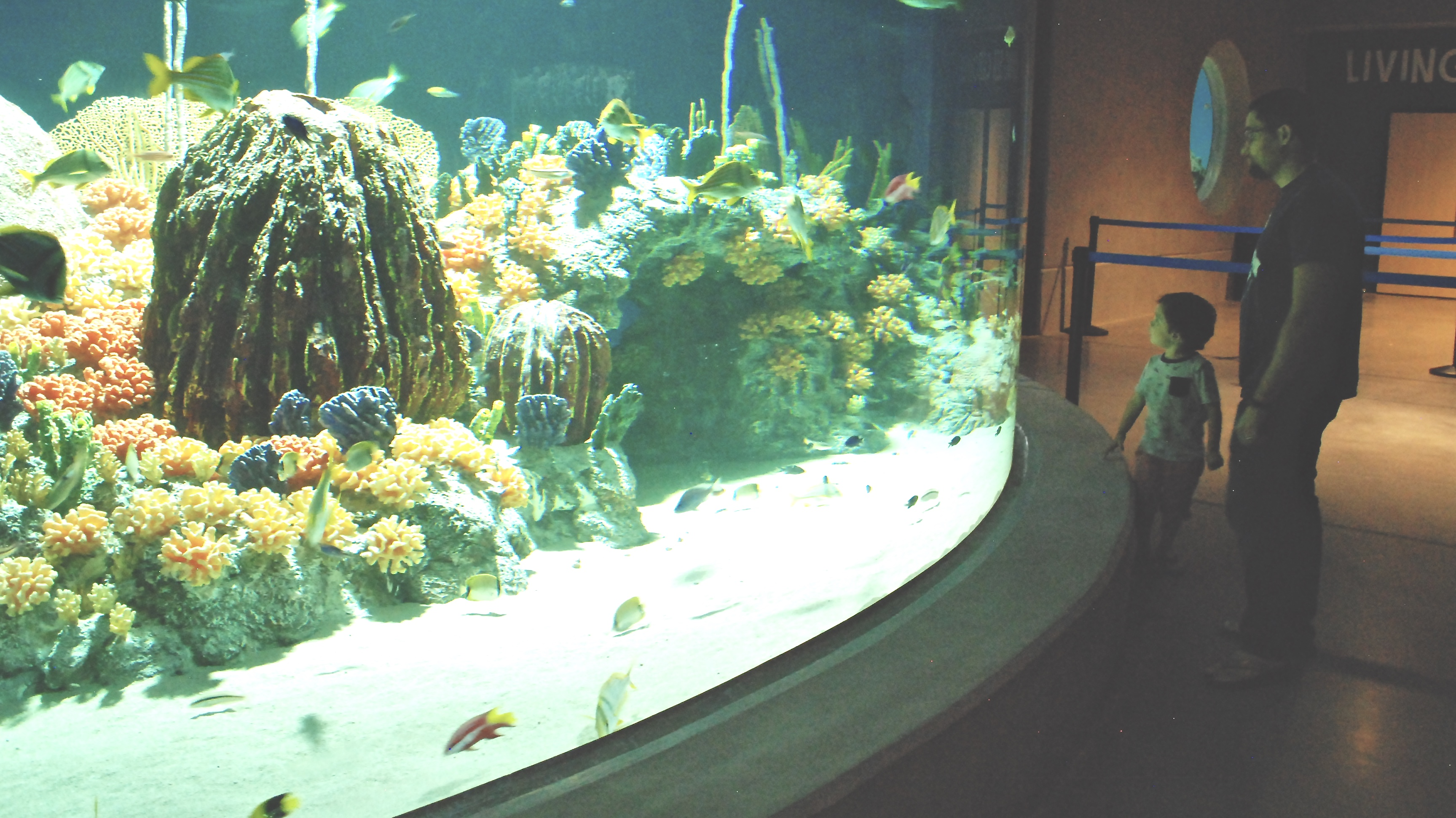 Reasons to Love the Odysea Aquarium