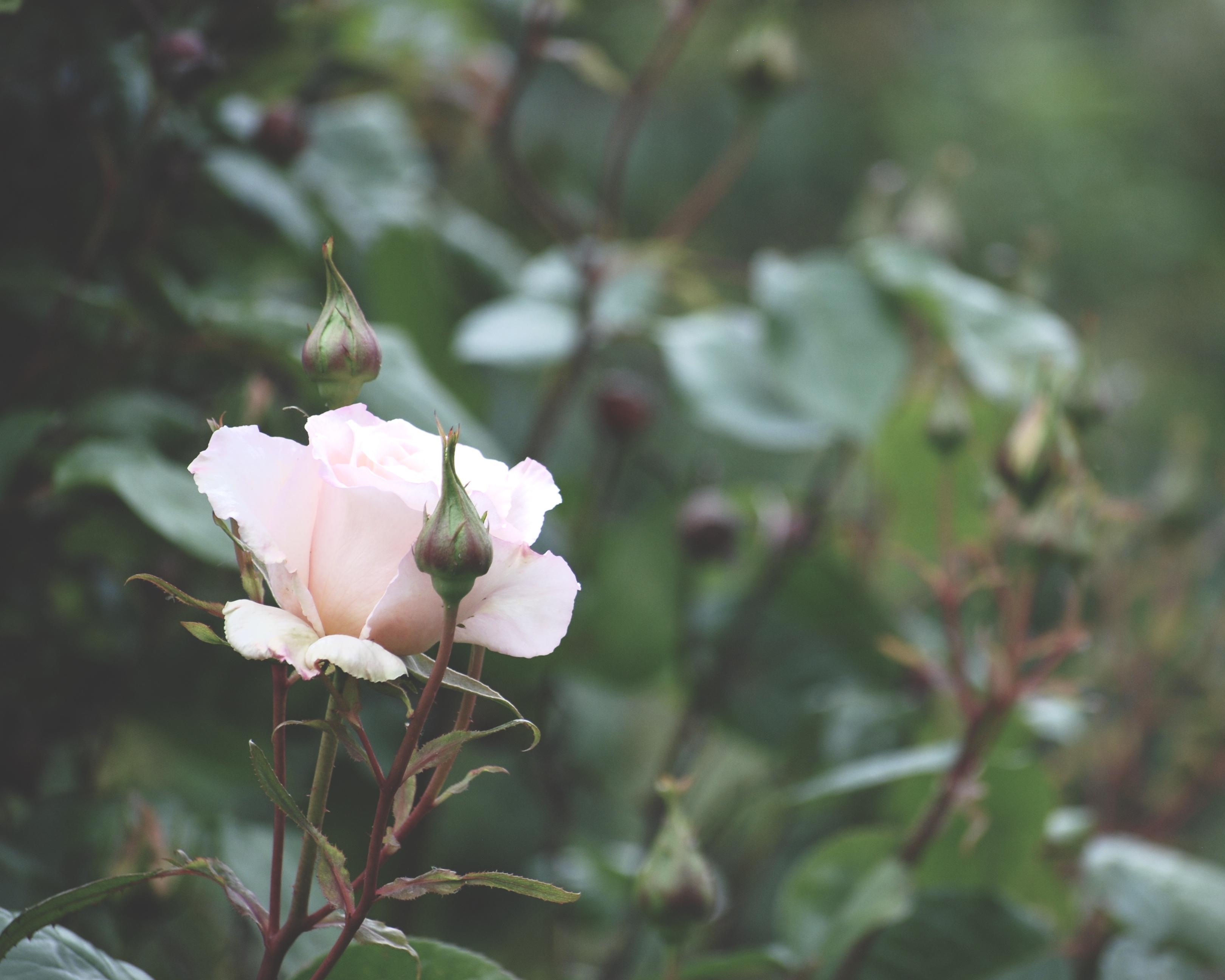 Attitude of Gratitude | June Giveaway