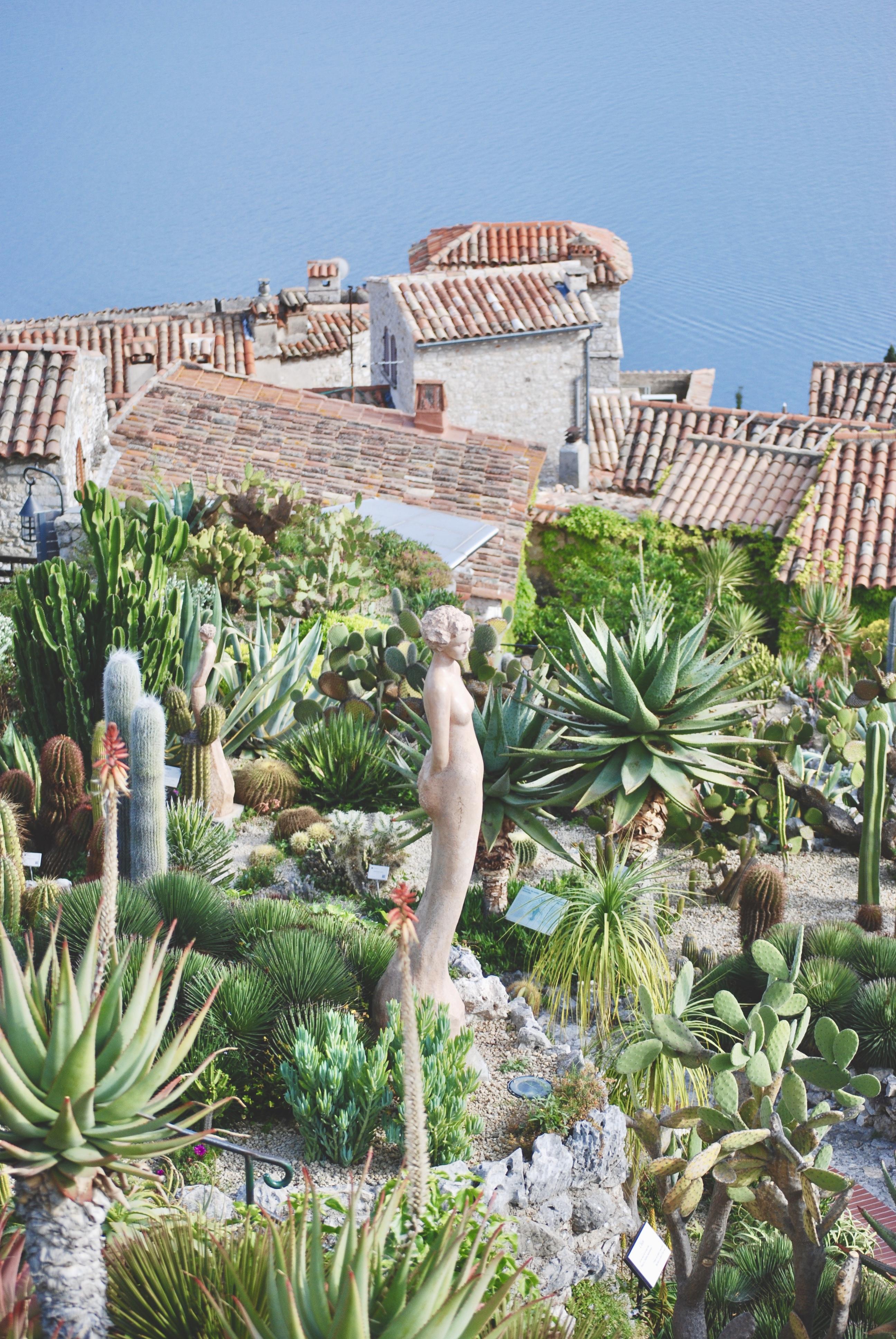 Eze Cactus